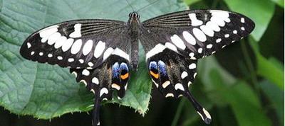 Искусственная бабочка